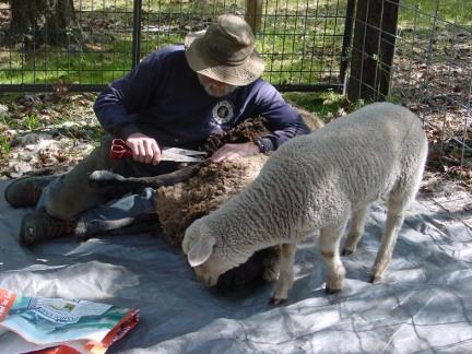 Shearing Dolly